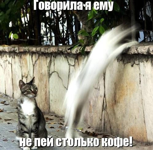 Кошки высказываются (26 фото)