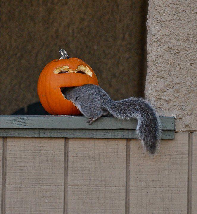 Пусть твои, картинки хэллоуин прикольные