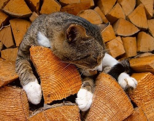 Кошачья умора (33 фото)