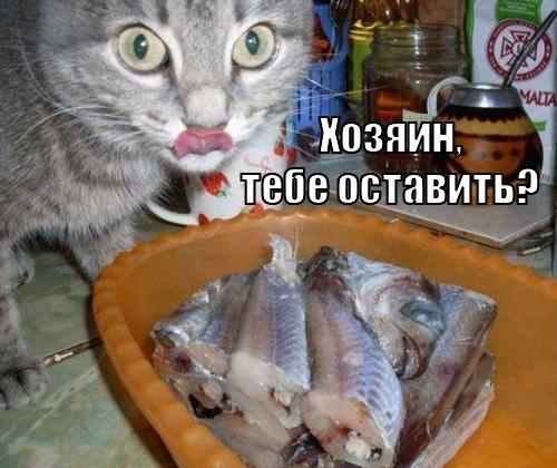 Ох уж эти кошки! (25 фото)