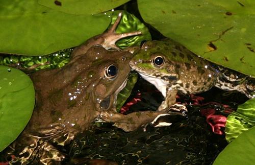 картинки поцеловала жабу обширную