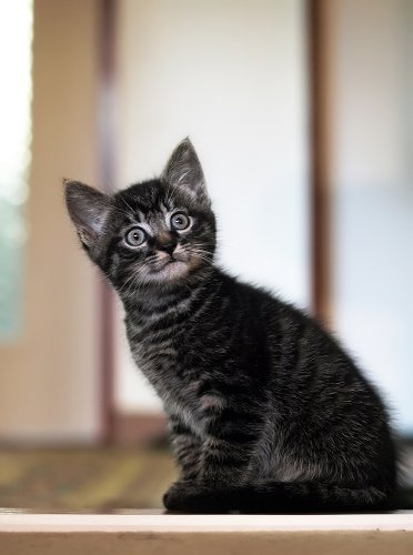 Кошки (11 фото)
