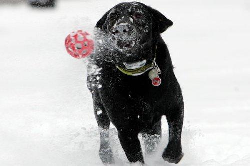 Собака в собачий холод