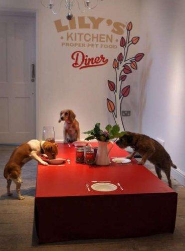 Ресторан для собак (6 фото)