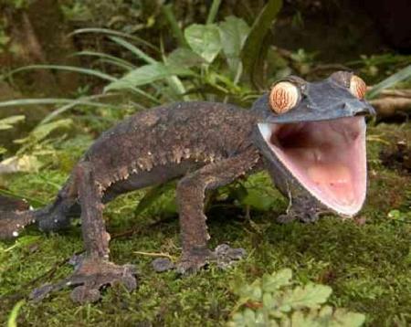 Животные с необычными глазами (5 фото)