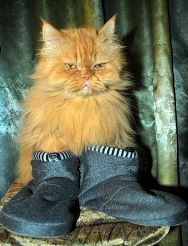 Кот с сапогах (19 фото)