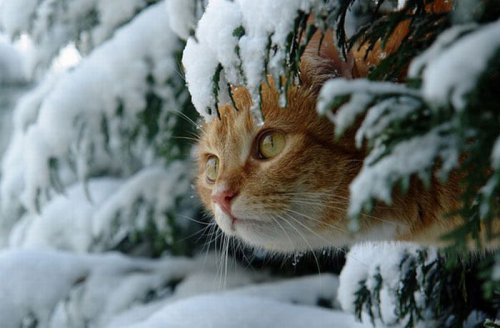 Flёur - Тёплые коты