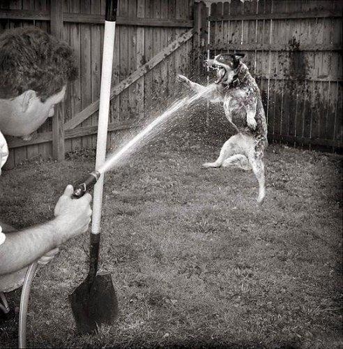 Позитивная подборка животных (30 фото)