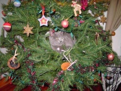 Украшения Новогодней ёлки (20 фото)