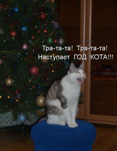 Новогодняя котоматрица (30 фото)