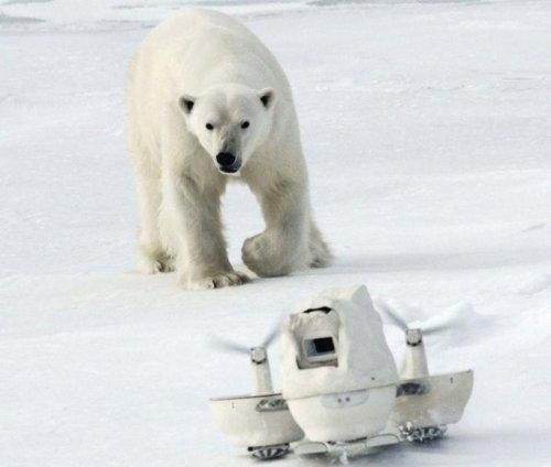 Белый медведь разбивает камеры стоимостью $200 тысяч (7 фото)