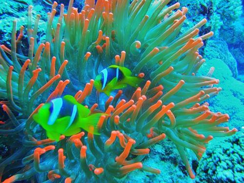Подводный мир (35 фото)