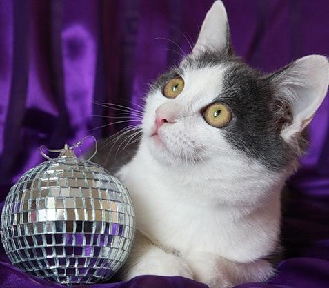 Чудесные новогодние мгновения (30 фото)