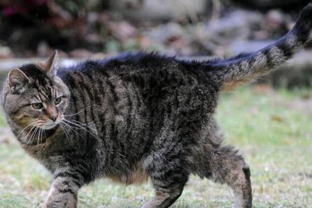 Самая старая кошка в мире отметила 39-й день рождения.