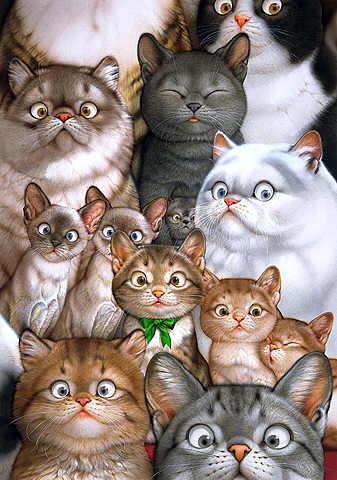 Кошачьи законы