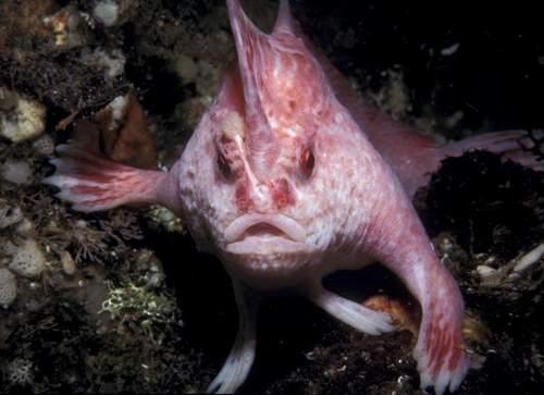 Странные существа открытые биологами в 2010 году (10 фото)