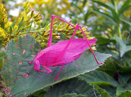 Обычные животные с экзотической окраской (5 фото)