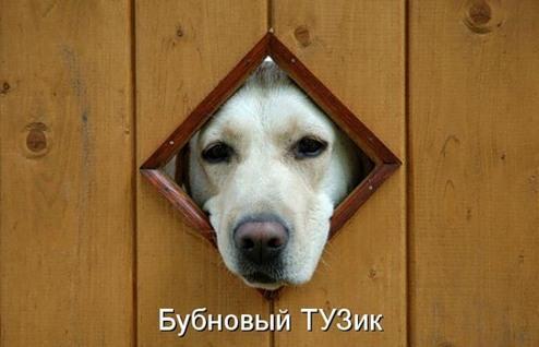 Собака-лайф (24 фото)