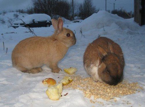 Это интересно: О кроликах