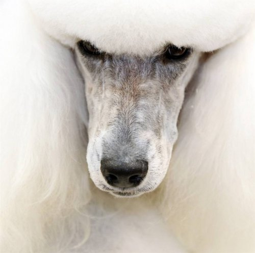 Лучшие фото животных 2010 года (27 фото)