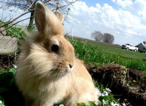 Зайки-кролики (25 фото)