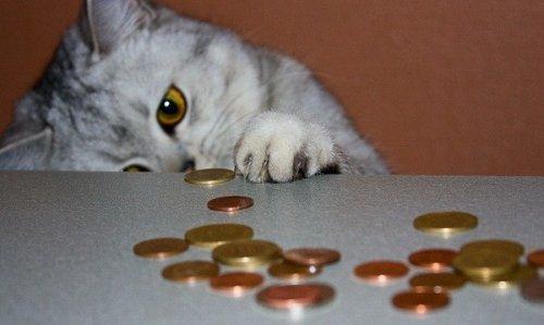 Позитивные кошки (28 фото)