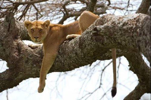 Национальный парк Серенгети (18 фото)