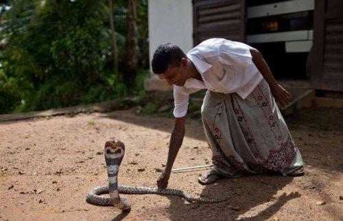 Змеи-Горынычи (17 фото)