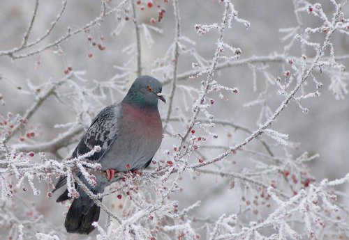 Зимний позитив (20 фото)