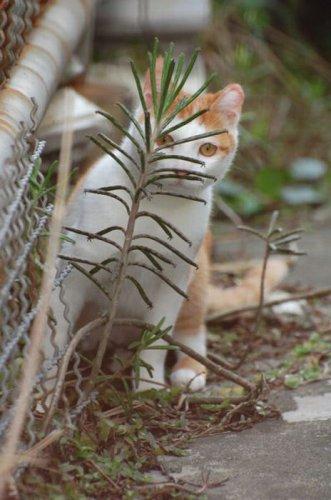 В засаде (40 фото)