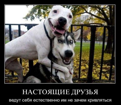 Демотиваторы про животных (28 фото)