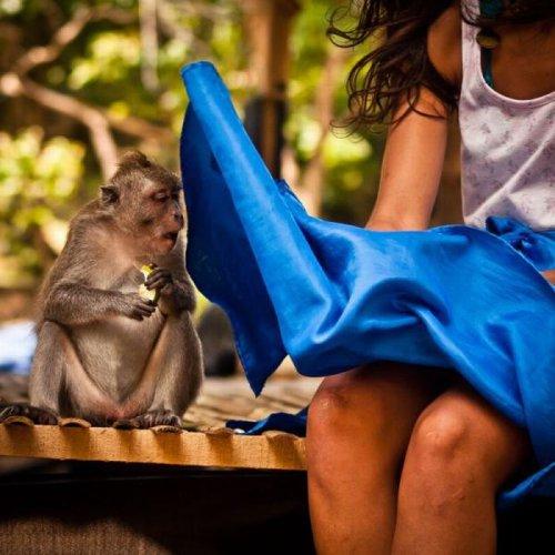 Прикольные обезьяны (18 фото)