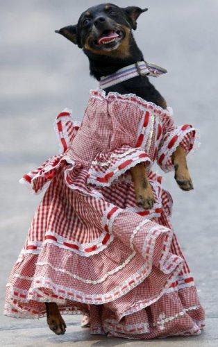 Собачка на прокачку (25 фото)
