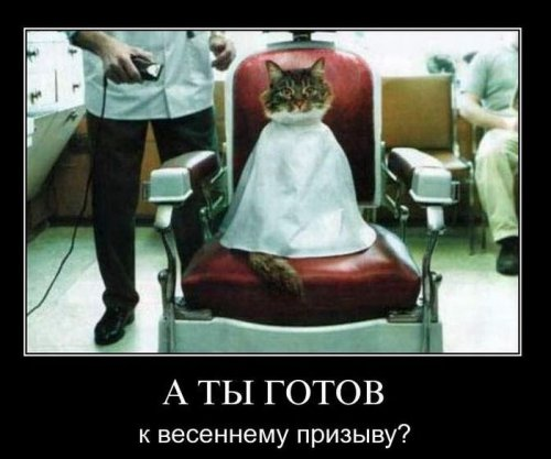 Демотиваторы про животных (25 фото)