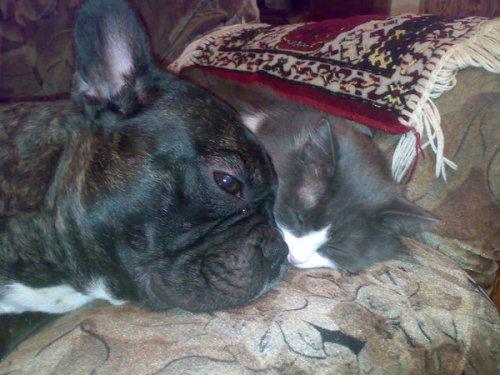 Кошки и собаки-лучшие друзья! (25 фото)