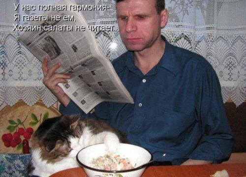 Забавная котоматрица (50 фото)