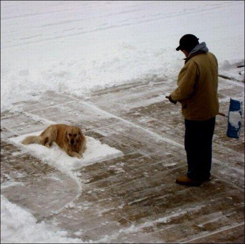 «На белом покрывале января» (6 фото)