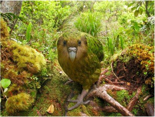 Самые редкие птицы на планете (14 фото)