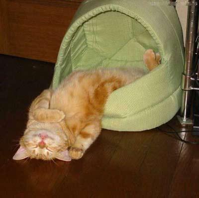 Кошкины приколы