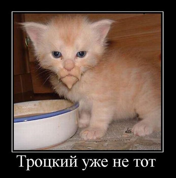 смешные демотиваторы про котенка члены