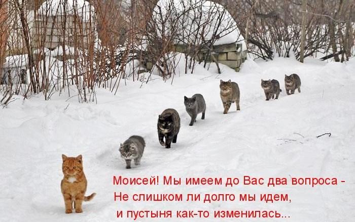 http://klopik.com/uploads/posts/2011-02/1298018587_1297411122_kotomatrix_50.jpg