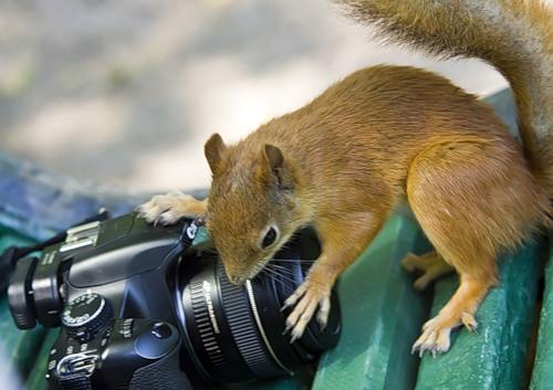 Любопытство-не порок (30 фото)