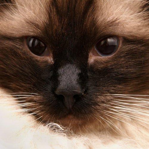 Большая подборка семейства кошачьих (70 фото)
