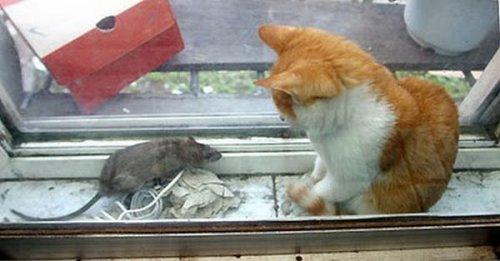 Чем закончилась встреча кота и мышки (6 фото)