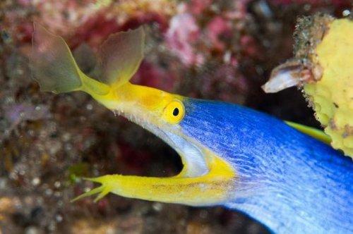 Удивительные обитатели морских глубин (37 фото)