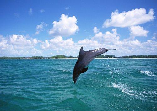 Красавцы-дельфины (58 фото)