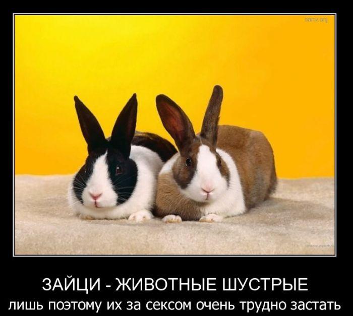 Демотиваторы про кроликов