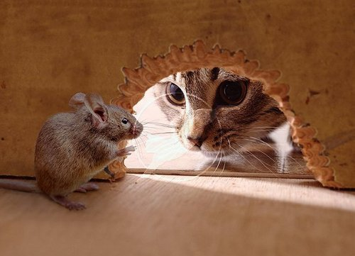 Сердце мышонка