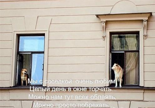 Собака-лайф (22 фото)