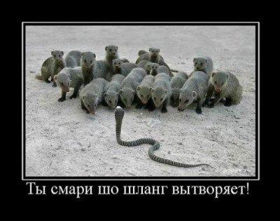 Демотиваторы о животных (35 фото)